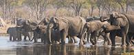 Botswana Wildside