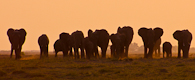 Botswana & Zimbabwe Ivory Route