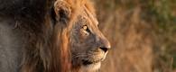 Expedition Botswana, Trans Kalahari